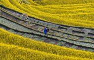 The harvesting season