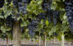 Ngày Malbec thế giới và tối thử nếm để khám phá rượu vang và ẩm thực Argentina tại khách sạn Pan Pacific
