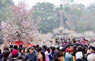 Lễ hội hoa anh đào Nhật Bản - Hà Nội 2020 sẽ tổ chức vào tháng 3-2020
