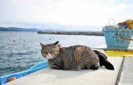 Tashirojima - hòn đảo của những chú mèo mập ú ở Nhật Bản