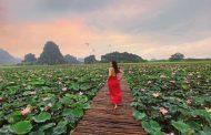 Đầm sen kỳ lạ nở rộ rực rỡ giữa mùa đông Ninh Bình