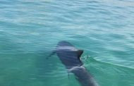 Dolphin Stuns Beachgoers at New Alma Resort in Cam Ranh