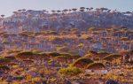 Vẻ đẹp của hòn đảo đến từ hành tinh khác Socotra