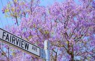 Thành phố hoa phượng tím Pretoria (Nam Phi)